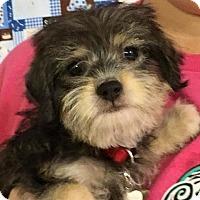 Adopt A Pet :: Dandy - Wharton, TX