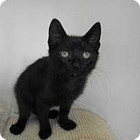 Adopt A Pet :: Hildago - Milwaukee, WI