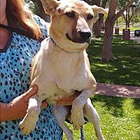 Adopt A Pet :: Kie - Ogden, UT