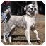 Photo 2 - Australian Shepherd Mix Dog for adoption in Savannah, Georgia - Shaun