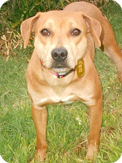 Beagle/Dachshund Mix Dog for adoption in Phoenix, Arizona - BLOSSOM