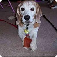 Adopt A Pet :: Brodyman - Phoenix, AZ