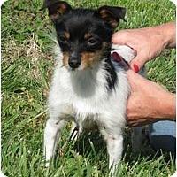 Adopt A Pet :: Tinky - Westbrook, CT
