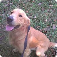 Adopt A Pet :: *Finnegan - PENDING - Westport, CT
