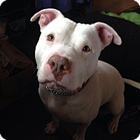 Adopt A Pet :: Hogan - Medicine Hat, AB