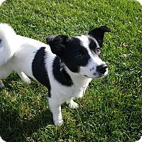 Adopt A Pet :: Bobby - La Mirada, CA