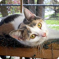 Adopt A Pet :: Abby - Anderson, IN