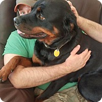 Rottweiler Dog for adoption in Las Vegas, Nevada - Ruby
