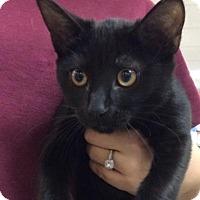 Adopt A Pet :: Moon - Tampa, FL