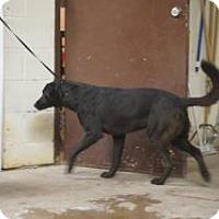 Adopt A Pet :: George Jones - Terrell, TX