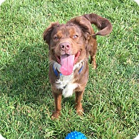 Adopt A Pet :: Rufus - Indian Trail, NC