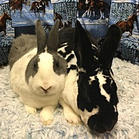 Adopt A Pet :: Juno and Marla - Idaho Falls, ID