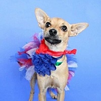 Adopt A Pet :: Faline - Mesa, AZ