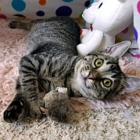 Adopt A Pet :: Shailee - Winchester, CA
