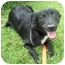 Photo 2 - Border Collie/Terrier (Unknown Type, Small) Mix Dog for adoption in Chapel Hill, North Carolina - Greta