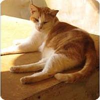Adopt A Pet :: Peanut - Makawao, HI