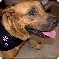 Adopt A Pet :: Hailey - Orlando, FL