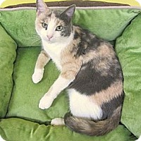 Adopt A Pet :: Kali - Mobile, AL
