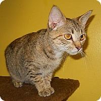 Adopt A Pet :: Copperfield - Mobile, AL