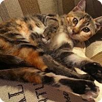 Adopt A Pet :: Tess - San Fernando Valley, CA