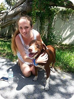 Pointer Mix Dog for adoption in loxahatchee, Florida - Faith
