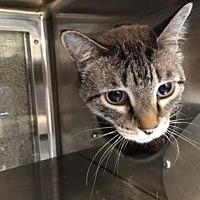 Adopt A Pet :: Lloyd - Palm Springs, CA