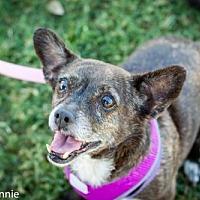 Adopt A Pet :: Bethany - Tucson, AZ