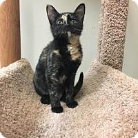Adopt A Pet :: Delilah - Suwanee, GA