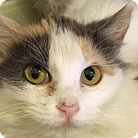 Adopt A Pet :: Millie - Bourbonnais, IL