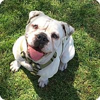 Adopt A Pet :: Noel - Santa Ana, CA