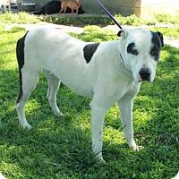 Adopt A Pet :: Ernie - Foster, RI