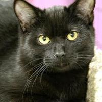Adopt A Pet :: McGregor - Vinton, IA