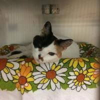 Adopt A Pet :: Alba - New Port Richey, FL