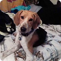 Adopt A Pet :: Tallulah - Providence, RI