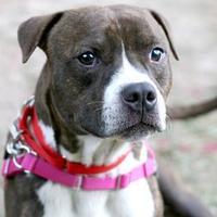 Adopt A Pet :: Bernie - Williamsburg, VA