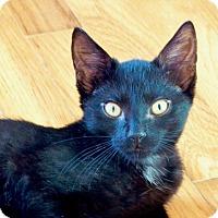 Adopt A Pet :: Pretzel - Greenburgh, NY