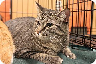 Domestic Shorthair Cat for adoption in Smyrna, Georgia - Eva & Jasper