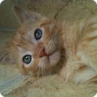 Adopt A Pet :: Romeo - Denton, TX