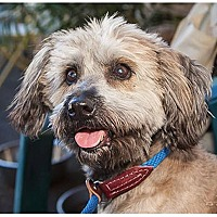 Adopt A Pet :: Buster - Canoga Park, CA
