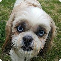 Adopt A Pet :: Pecan - La Mirada, CA