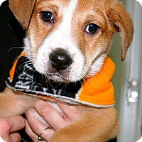 Adopt A Pet :: Jellybean - Erwin, TN