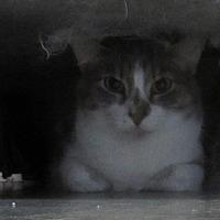 Adopt A Pet :: Micheal - Jackson, MO