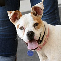 Adopt A Pet :: Penny - Palmdale, CA