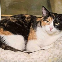 Adopt A Pet :: APRIL - Albuquerque, NM