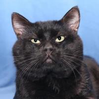 Adopt A Pet :: Ethan - Mentor, OH