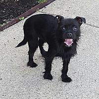 Adopt A Pet :: Willow - London, KY