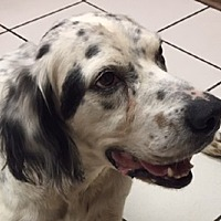 Adopt A Pet :: OSSA - Pine Grove, PA