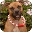 Photo 2 - Staffordshire Bull Terrier Dog for adoption in Long Beach, California - Molly