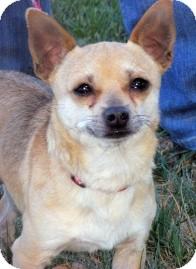 Chihuahua Dog for adoption in Turlock, California - Eddie