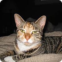 Adopt A Pet :: Cuddles - Riverhead, NY